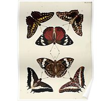 Exotic butterflies of the three parts of the world Pieter Cramer and Caspar Stoll 1782 V3 0186 Poster