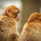 Let's go see the monkeys - Aapjes kijken  by steppeland