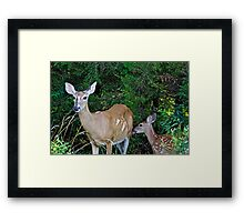 Whitetail Deer Doe and Fawn Framed Print