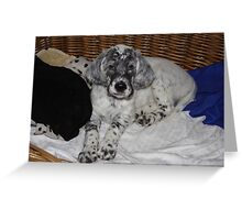 English Setter Puppy Greeting Card