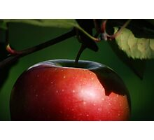 single apple Photographic Print