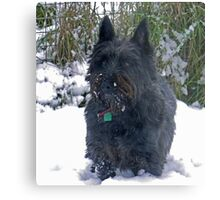 Harry walkies Metal Print