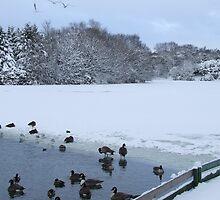 Snow White - Stamford Park Boating Lake, Stalybridge by Chris Goodwin