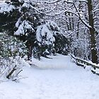 Footsteps In The Snow - Stamford Park, Stalybridge by dawnandchris
