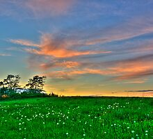 Clouds over a Dandelion Field by gnomeplanet