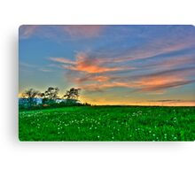 Clouds over a Dandelion Field Canvas Print