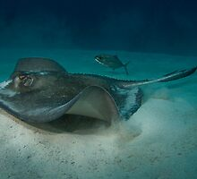 Stingray and Bar Jack by Todd Krebs