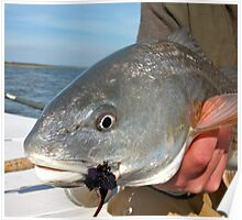 redfish on the fly Poster