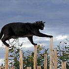 Cat Walk by Loree McComb