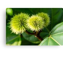 Naturally spikey Canvas Print