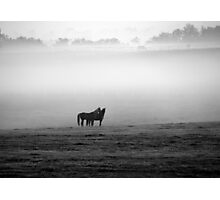 Horses in the Mist Photographic Print