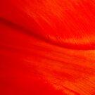 Red Tulip Dune by jeliza