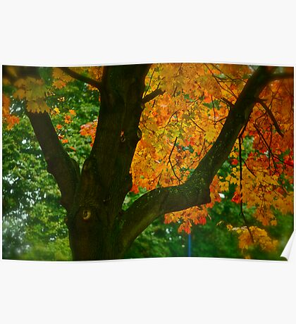 Come away with me autumn . by Brown Sugar. Views ( 94 ) Thanks ! Poster