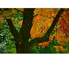 Come away with me autumn . by Brown Sugar. Views ( 94 ) Thanks ! Photographic Print