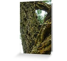 In-tree-guing question? Solved by bubblehex08 ~ Cork Oak tree ~  Greeting Card
