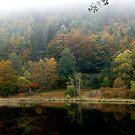 Sankenbachsee by wistine