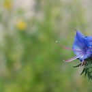 Just your average flower. by Janne Keinänen