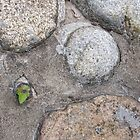 A bit of life amongst stones by Janne Keinänen
