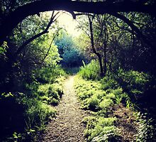 Hiking through the overgrowth from the darkness to the light. by JULIENICOLEWEBB