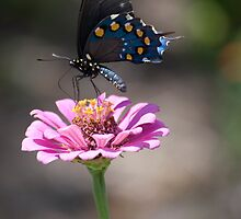 Swallowtail Butterfly by Agro Films