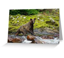 Creek Walker Greeting Card
