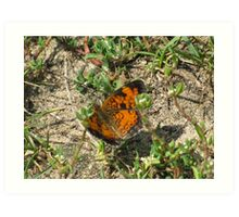 Butterfly's are heaven sent Art Print