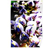 Purple Vine Flowers  Poster