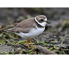 Full Frame Semi/ Semi Palmated Plover Photographic Print