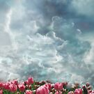 Clouds and tulips....heaven by Jeff Burgess