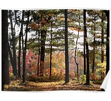 Autumn Forest in Wisconsin 1 of 2 Poster