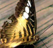 Butterfly Brownie Sticker