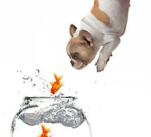 Puppy Jumping Into a Fish Bowl by Katrina Brown