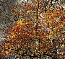 Beech foliage by photontrappist