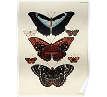 Exotic butterflies of the three parts of the world Pieter Cramer and Caspar Stoll 1782 V4 0342 Poster