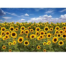 Sunflower Field With Heavenly Sky Photographic Print