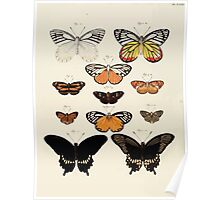 Exotic butterflies of the three parts of the world Pieter Cramer and Caspar Stoll 1782 Supplement 0226 Poster