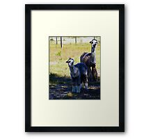 Boomer and Son Framed Print
