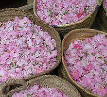 Petals - Marrakesh, Morocco by craigs79