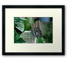 Butterfly Owl Framed Print