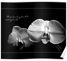 Orchid Brothers Poster