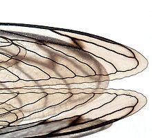 Cicada V by Cameron Hampton
