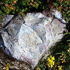 Rock in the wilderness by djackson