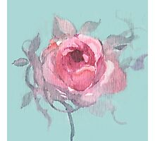 Roses in blushing pink Photographic Print