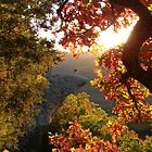 Autumn&#x27;s Morning Glow, Hawks Bill Crag by NatureGreeting Cards ccwri