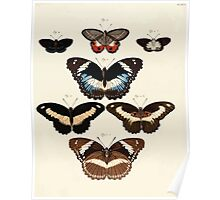 Exotic butterflies of the three parts of the world Pieter Cramer and Caspar Stoll 1782 Supplement 0189 Poster