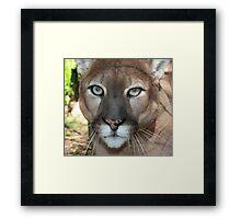 Mac Cougar Framed Print