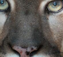 Mac Cougar Sticker