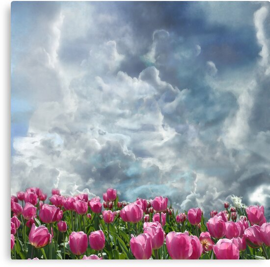 Resubmit of Clouds and Tulips by Jeff Burgess