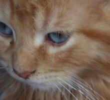 The precious kitten Sticker