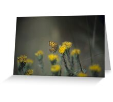 Butterfly And Rabbit Brush Greeting Card